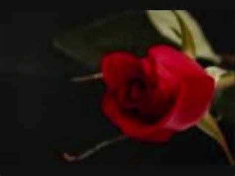 Roses Are Red Bobby Vinton - YouTube