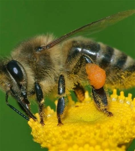 Sustainable Verona To Show Movie About Endangered Bees