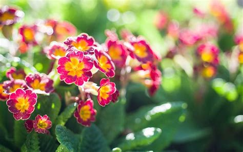 The 10 best early spring flowers for pollinating insects